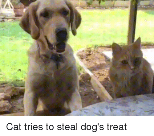 Cat Tries To Steal Food From Dog