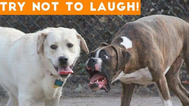 Funny Dogs Compilation Video To Help You Through The Week Daily